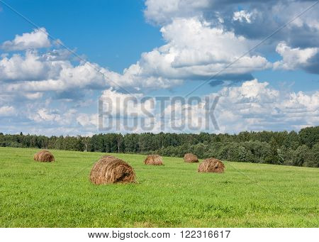 Field With Haystacks Near Forest.