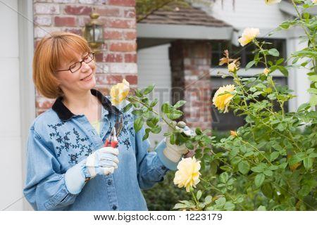 Las mujeres cortan rosas en el jardín
