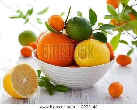 Stillleben mit Orangen, Zitronen, Limetten, Kumquats, Citrofortunella und Mandarinen