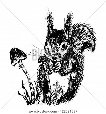 drawing a small furry squirrel, eat breakfast near the fungus, ink sketch hand drawn vector illustration