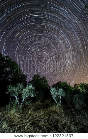 Star trail above an olive couple of trees