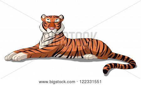 Bengal Tiger Isolated on White Background.