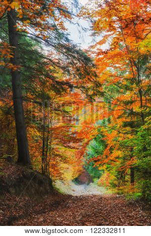 Carpathian Mountains. The beautiful landscape of the autumn forest paint