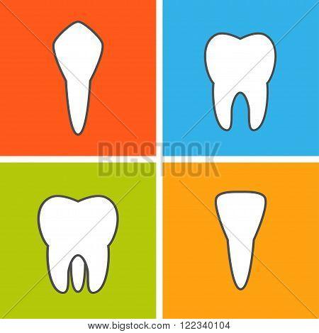 Tooth types. Dental vector illustration. Flat outline