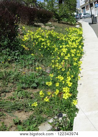 .yellow Weeds On Embankment