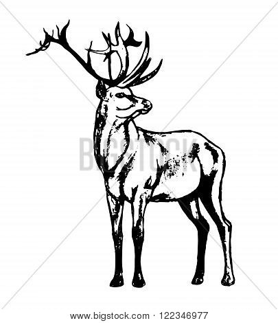 Graphic image of a wild animal on a white background. The figure in black outline red deer a wild animal with big antlers. Vector illustration abstract in black and white