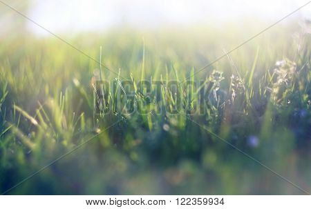 abstract def ocused spring grass with sunlight ** Note: Soft Focus at 100%, best at smaller sizes