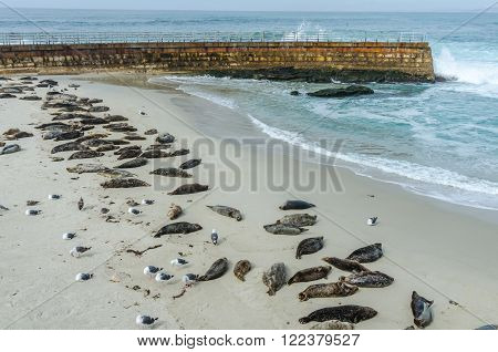 Sea lions sleeping on the protected La Jolla cover with wave crashing on the sea wall