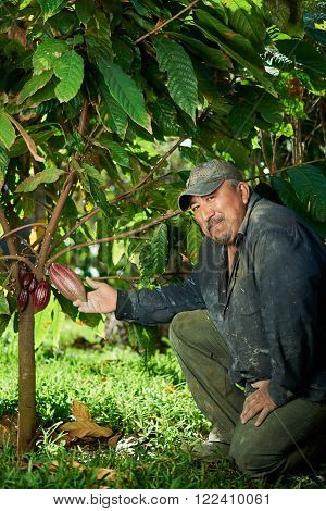 farmer man with cacao red pod on green garden