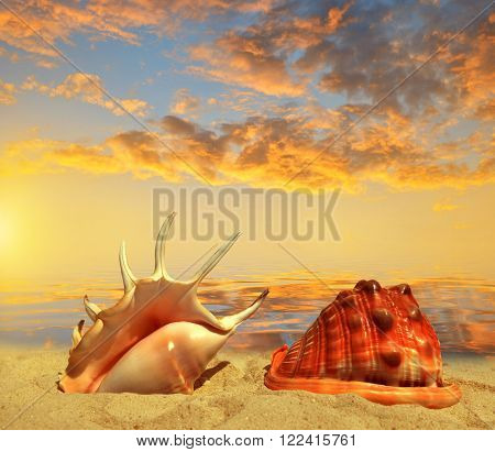 Sea shells on beach in the sunset