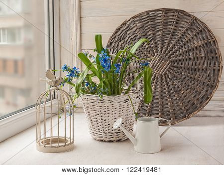 Vintage decoration with a decorative cage and scilla in basket next watering can