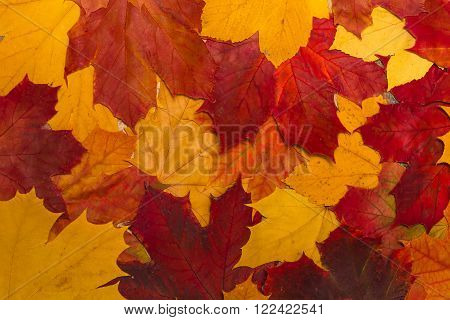 vintage autumn leaves with patina wooden background