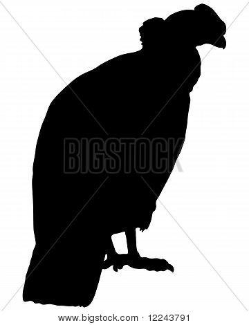 Condor Silhouette