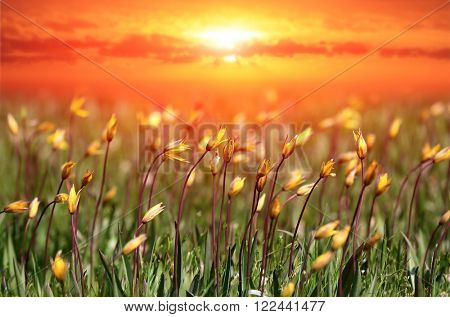 wild flowers on meadow against sunset sky background