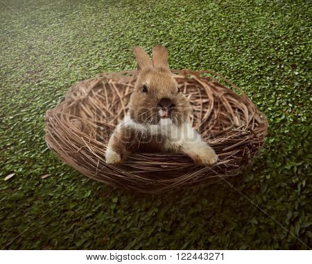 Cute Easter Bunny Inside The Nest