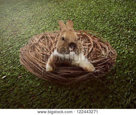Cute Easter Bunny Inside The Nest
