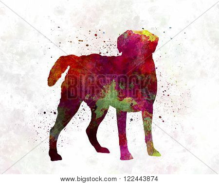 Chesapeake Bay Retriever in artistic abstract watercolor