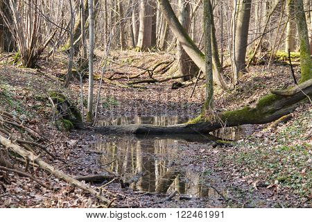 narrow brook in the floodplain forest in autumn ** Note: Shallow depth of field