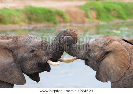 Jousling Elephants