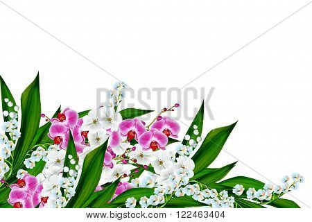 flowers lily of the valley. Flowers of lilies of the valley and orchid isolated on white background.