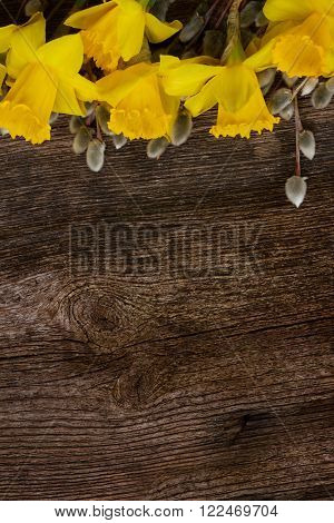 spring fresh  yellow daffodils flowers with catkins border on wooden background