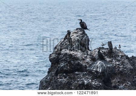 cormorants and seagulls resting on the rock