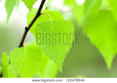 the green leaves on a tree close up a macro