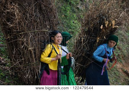 HAGIANG, VIETNAM, OCT 26, 2016: Unidentified H'mong ethnic minority women carry dry trees on road. Ha Giang stone highland has Dong Van Karst Plateau Global Geopark.