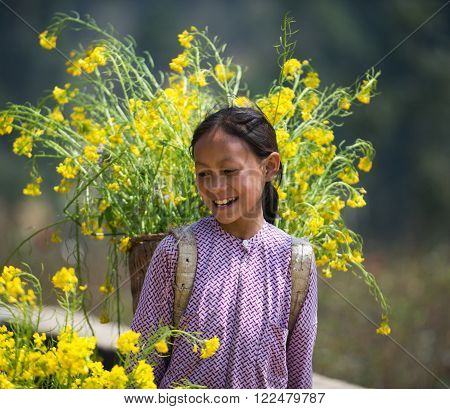 HAGIANG, VIETNAM, FEBRUARY 27, 2016 : Unidentified ethnic minority kids with baskets of rapeseed flower in Hagiang, Vietnam. Hagiang is a northernmost province in Vietnam