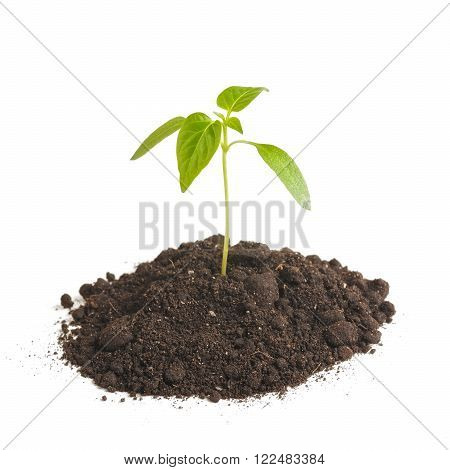 Green sprout plants growing from heap of soil, isolated on a white background.