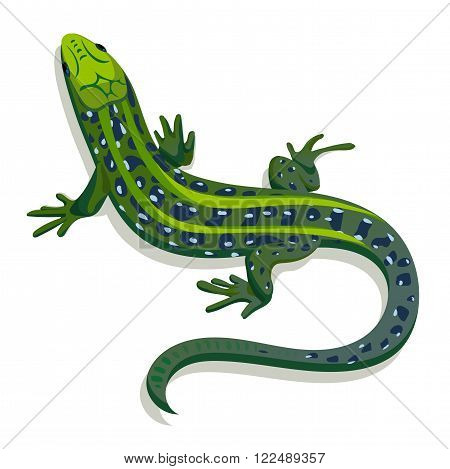 Green lizard vector illustration on a white background