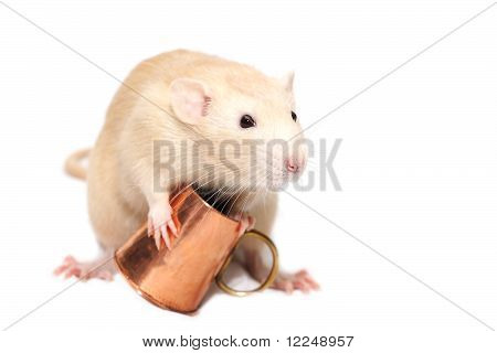 Ginger smiling rat with copper mug