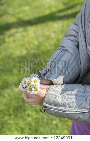 Daisies in the small kid hand making a bouquet