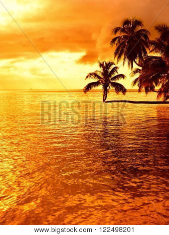 Tropical sunset at a beach with a coconut palm tree on Moorea an island near Tahiti in French Polynesia.