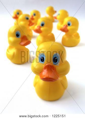 Bunch Of Ducks 2 P1020875