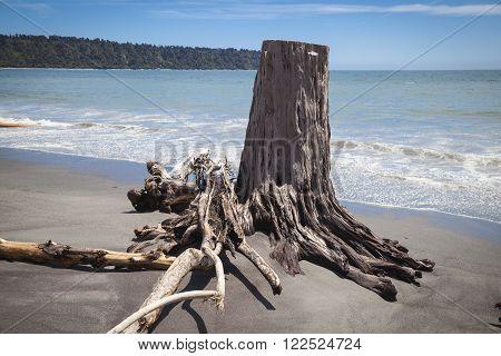 Driftwood at the beach New Zealand West coast