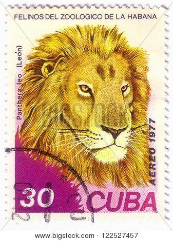 Cuba- Circa 1977: A Stamp Printed In , Shows Wild Cats Lion, Series, Circa 1977