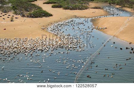 Animal, Herd, Duck,vietnam