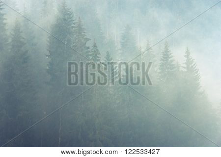 raw foggy atmosphere in mountain forest  by spring