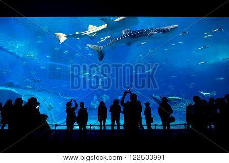 Aquarium in Okinawa city