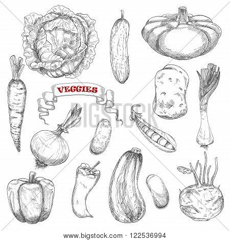 Carrot and cabbage, pepper and cucumber, onion and potato, zucchini and kohlrabi, beans and peas, leek and pattypan squash vegetables sketches