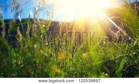 Beautiful spring nature landscape - Alpine meadow. Grass closeup with sunbeams. Beautiful Nature landscape with sun flare