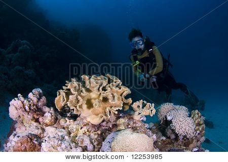 Buzo y Coral