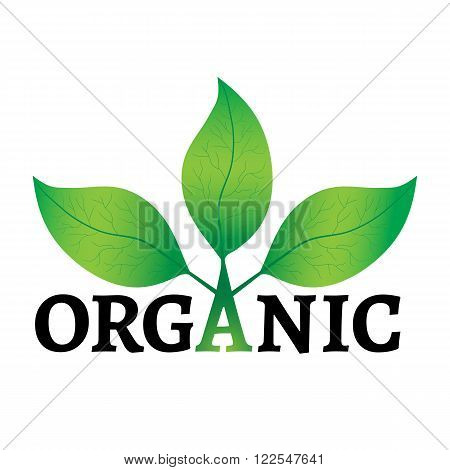 Organic concept or logo. Green leaves on a tree with organic text on a white background.