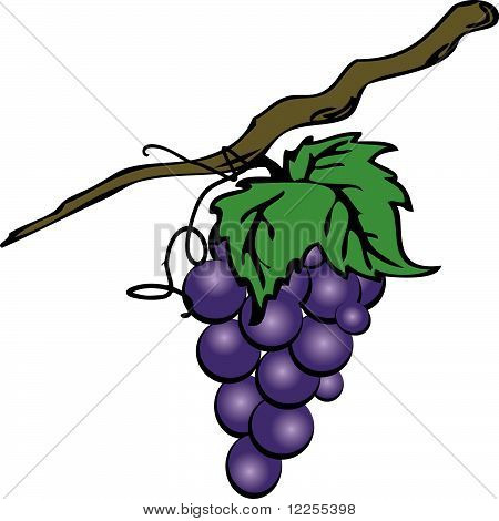 Grape cluster
