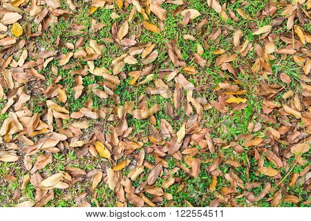 Beautify texture of dried leafs on grass at park ideal as background