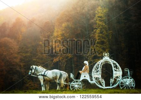 Retro cabman in wig sitting in vintage carriage of cinderella with white horses in green deep forest outdoor on natural background horizontal picture