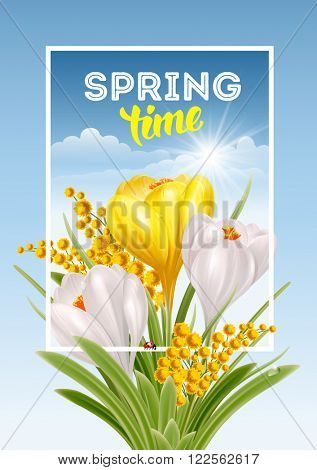 Vector Fresh Spring Illustration with Spring Flowers Crocuses and Mimosas. Floral Spring Bouquet in frame with Text Spring Time.