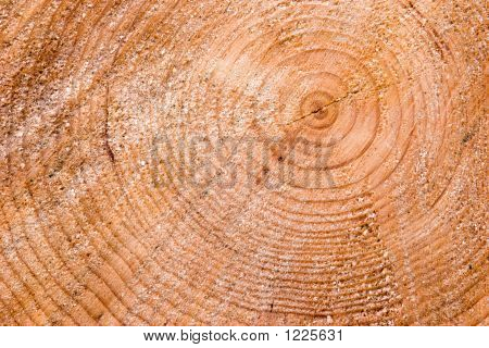 Tree Stump Background