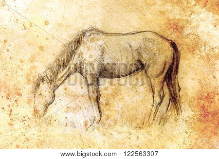 Draw pencil horse on old paper, vintage paper and old structure with color spots